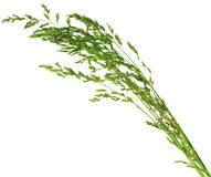 Meadow-grass Royalty Free Stock Images