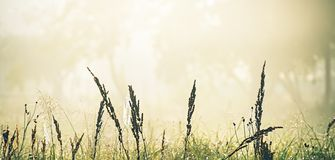 Meadow grass against the background of trees in the fog. Spring Royalty Free Stock Photos