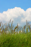 Meadow grass and a blue cloudy sky. Meadow grass with blue sky and big cloud in the background Stock Image