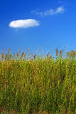 Meadow grass and a blue sky. With some clouds Stock Photography
