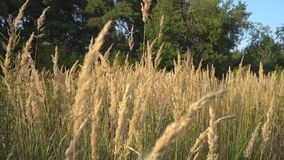 Meadow grass in the early autumn stock video footage