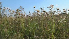 Meadow grass in the early autumn stock video