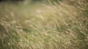 Meadow grass field stock video