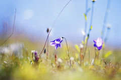 Meadow with grass and flowers Royalty Free Stock Image