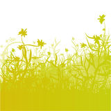 Meadow, grass and flowers Royalty Free Stock Photos