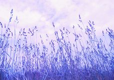 Meadow grass Royalty Free Stock Photo