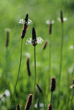 Meadow grass illuminated by the sun Royalty Free Stock Photo