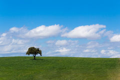 Meadow, grass land with tree, blue sky, screen saver computer Stock Photo