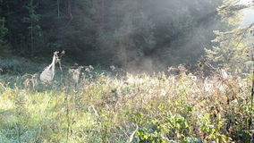 Meadow grass lot spiderweb spider web fog vapour evaporate stock footage