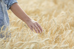 Meadow grass in the morning sun, young woman walking Royalty Free Stock Photos