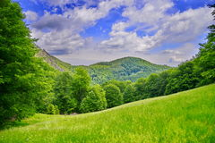 Meadow with grass and mountains. Stock Photos