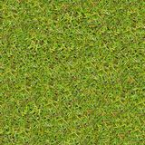 Meadow Grass. Seamless Texture. Royalty Free Stock Photos