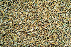 Meadow grass seeds Stock Photo