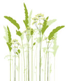 Meadow grass Stock Photography