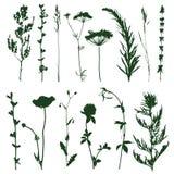 Meadow grass Stock Photos