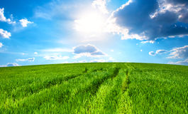 Meadow with a grass and the sky with clouds Royalty Free Stock Image