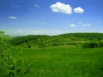 Meadow grass and sky. Meadow green grass and a blue sky Royalty Free Stock Image