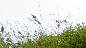 Meadow grass sway in the wind. Highland slope Royalty Free Stock Photo