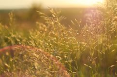 Meadow grass in the warm rays of the setting sun with bright artifacts. The concept of nature, eco, rural life Stock Photography