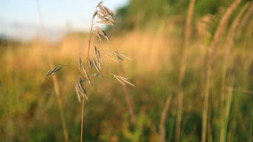 Meadow of grass on the wind stock footage