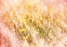 Meadow grass and yellow flower Royalty Free Stock Photography