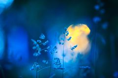 Free Meadow Grasses In Summer Night Royalty Free Stock Image - 118703616