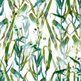 Meadow grasses of Provence Stock Photo