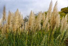 Meadow with grasses Royalty Free Stock Images