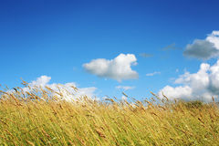 Meadow and Grassland. Blue sky. Kenozero park. Stock Photo