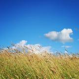 Meadow and Grassland. Deep blue sky. Kenozero park Royalty Free Stock Photo