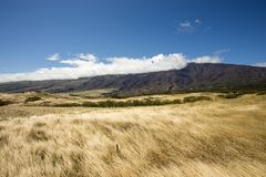 Meadow Grassland Field Royalty Free Stock Images