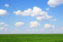 Meadow with green grass and blue sky Royalty Free Stock Image