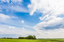 Meadow with green grass and blue sky Stock Photography