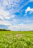 Meadow with green grass and blue sky Royalty Free Stock Photo