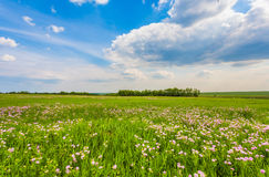 Meadow with green grass and blue sky Stock Images