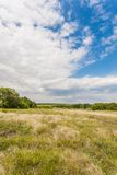 Meadow with green grass and blue sky Royalty Free Stock Photography