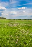 Meadow with green grass and blue sky Royalty Free Stock Photos