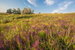 Meadow with green grass and blue sky Stock Photo