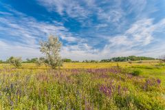 Meadow with green grass and blue sky Royalty Free Stock Images