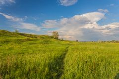 Meadow with green grass and blue sky Stock Image