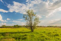 Meadow with green grass and blue sky Stock Photos