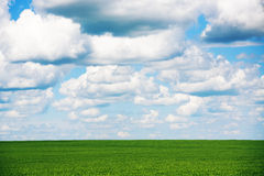 Meadow with green grass and blue sky with clouds Stock Photo