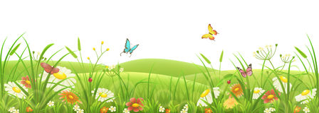 Meadow, green grass and flowers. Spring summer meadow, green grass, flowers and butterflies Royalty Free Stock Images