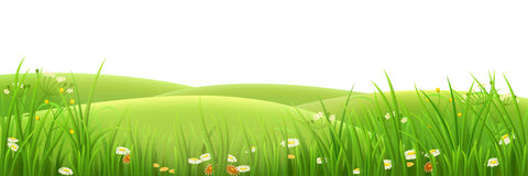 Meadow, green grass and flowers. Vector illustration Royalty Free Stock Photography