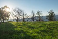 Meadow with green grass illuminated by the morning sun through the trees against the blue sky. With the outlines of the mountains Royalty Free Stock Image