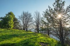 Meadow with green grass illuminated by the morning sun through the trees against the blue sky. With the outlines of the mountains Royalty Free Stock Photography