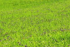 Meadow with green grass Royalty Free Stock Photo
