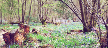 Meadow with green grass in the middle of a forest Stock Photography