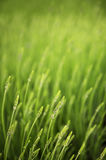 Meadow with green grass Stock Photography