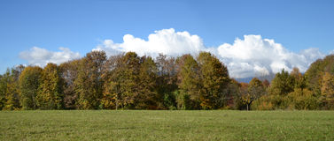 Meadow with green grass and trees with blue sky in the backgroun. D Stock Images